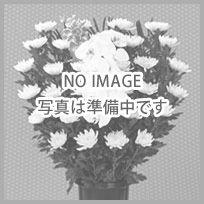 供花:菊:15,750円
